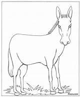 Donkey Animals Domestic Coloring Drawing Pet Global Animal Warming Colouring Pitara Shrek Outlines Getdrawings Tail Craft Paintingvalley Drawn sketch template