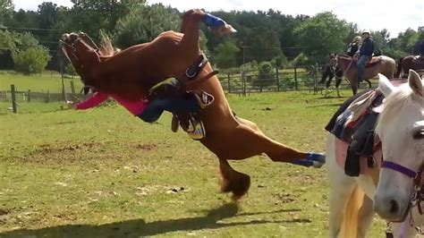 horse horses hurt rider injury equine human fail backwards flips humans equestrian injuries veterinary non onto related