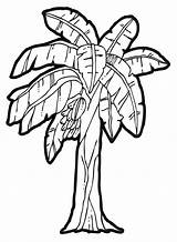 Banana Tree Coloring Clip Drawing Clipart Popular sketch template