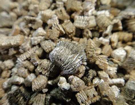 close  terra lite vermiculite sample close  view
