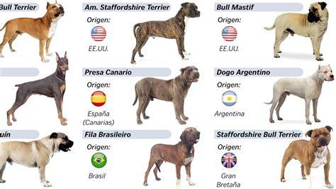 el propietario del perro  ataco  la veterinaria