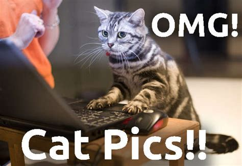 Omg Cat Meme - omg cats and maze of aries zodiac sign image 1355004 by yanito on favim com