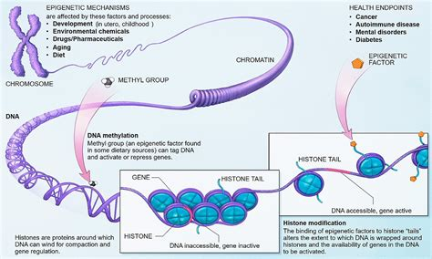 Modification Histone by Epigenetics