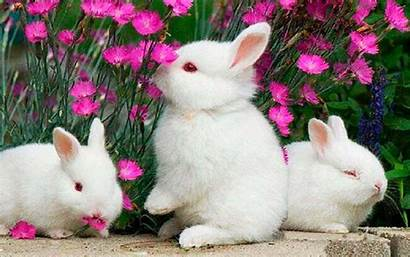 Funny Bunny App Bunnies Wallpapers Backgrounds Wallpaperaccess
