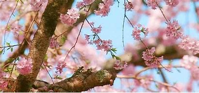 Aesthetic Spring Pastel Flowers Gifs Anime Peach