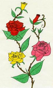 Drawings Of Roses With Thorns