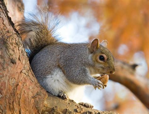 are black squirrels posinious funny picturesof