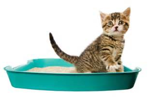 how to a cat to use a litter box the dangers of cat litter pets go