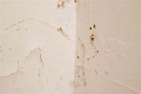 Zu Feucht Ursache by Aufsteigende Feuchtigkeit An Der Innenwand 187 Ursachen