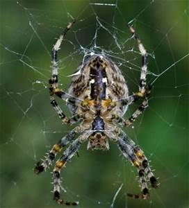 Spinnen Fernhalten Wohnung : wie kann man spinnen fernhalten ~ Whattoseeinmadrid.com Haus und Dekorationen