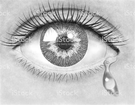 pencil drawing eye stock photo  pictures  adult