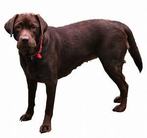 Dog PNG.. by WelshDragonStockNArt on DeviantArt