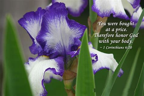 Of The Gods Flowers by And God Quotes About Flowers Quotesgram