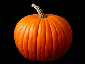 Best Pumpkin Stock Photos  Pictures  U0026 Royalty