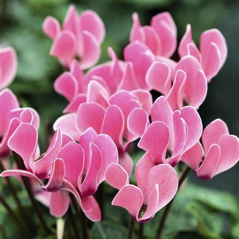 fleur qui fleurit toute l 233 e liste ooreka