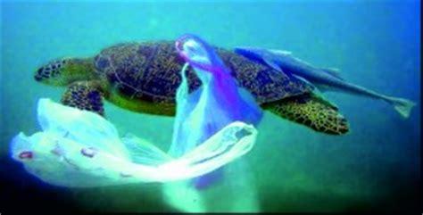 umweltverschmutzung plastik und ihre tueten netzfrauen