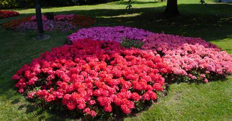 shade loving perennials uk hardy shade loving plants ehow uk