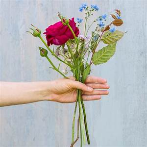 Bilder Von Blumenstrauß : einen blumenstrau selber binden so geht es schritt f r schritt ~ Buech-reservation.com Haus und Dekorationen