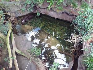 Lied Jungle - Pygmy Hippo Pool » Omaha's Henry Doorly Zoo ...