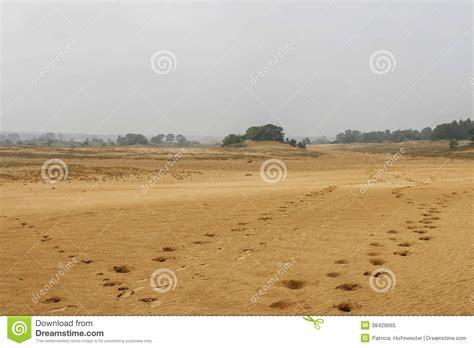 Horseshoe Prints Sand