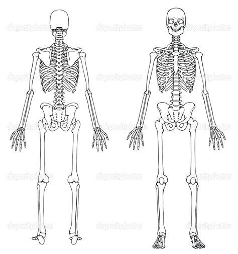 diagram anatomy human skull labeled diagram
