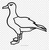 Albatross Clipart Coloring Pinclipart Mating Printable Outline Kittiwake Drawing sketch template