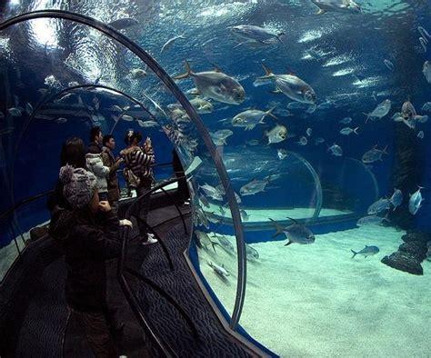 palmar 232 s les plus grands aquariums du monde forum algerie