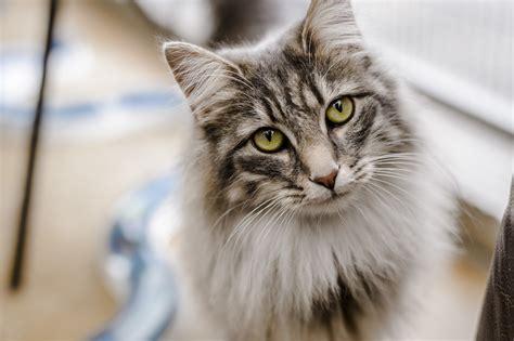 flea treatment  cats  kittens