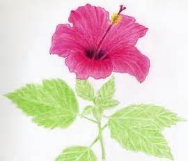Pretty Flower Drawings