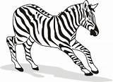 Zebra Coloring Animal Printable Zebras Drawing Animals Pdf Getdrawings Horse sketch template