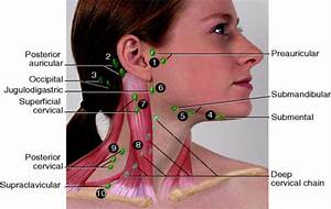 drain your lymph nodes in your neck | Useful things to ...