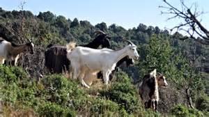 chambre agriculture corse assises territoriales de l elevage les 30 et 31 octobre