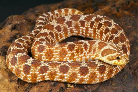 The 5 Best Small Pet Snakes (for Beginners)   Keeping ...