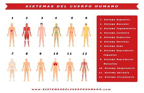 magn 237 fico los sistemas cuerpo humano bosquejo