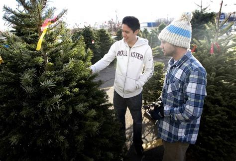 christmastree lot utah tree lot owner finds in selling trees orem news heraldextra