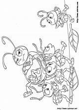 Bichos Colorear Dibujos Coloring Bugs sketch template