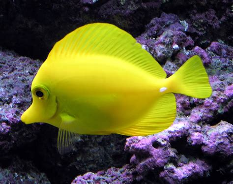 saltwater fish tropical fish wild life animal