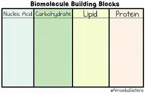 4  Biological Molecules
