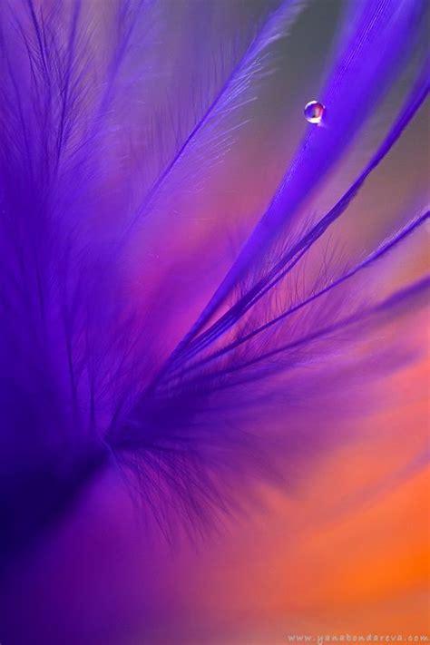 images  purple  orange color mix  pinterest