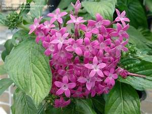Red Pentas StarCluster (page 2) - Pics about space