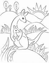 Kangaroo Colouring Coloring Printable Clipart Pages Transparent Museprintables Drawing Webstockreview sketch template