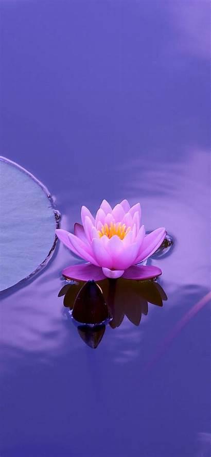 Lotus Flower Nature Iphone Wallpapers Health Wallpaperbro