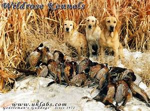 Free Waterfowl Hunting Wallpaper - WallpaperSafari