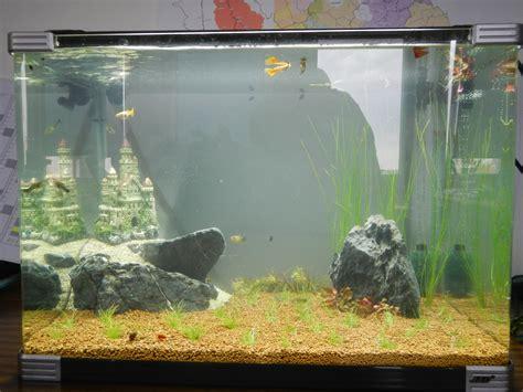 aquarium 80 litres pas cher un aquarium au boulot