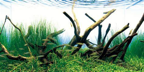 aquarium driftwood   tank  aquarium guide