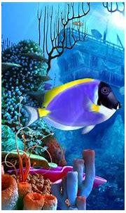 3d Screensaver Free   Underwater wallpaper, Underwater ...