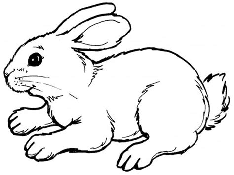 printable rabbit coloring pages  kids recipes