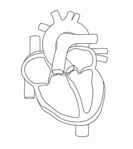 19  Heart Diagram Templates  U2013 Sample  Example  Format