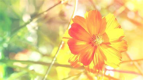 bright floral background   pixelstalknet
