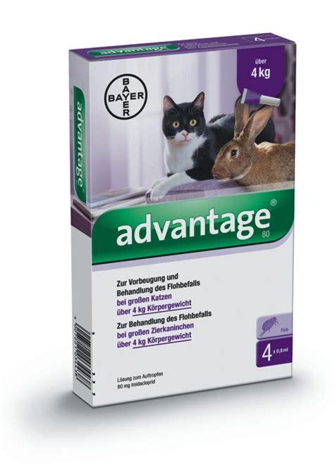Advantage 80 Katze